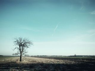 tree travel landscape minimalism freetoedit