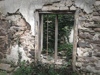 window jungle oldbuilding freetoedit