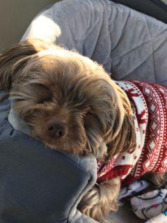 california photography sleeping dogsofpicsart dogs