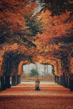 picsart autumn
