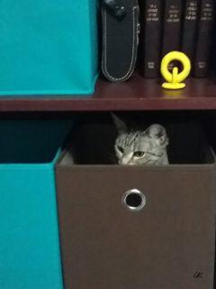 cute cat cutecat photography petsandanimals