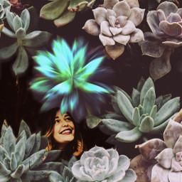 freetoedit prismeffect light flower magic