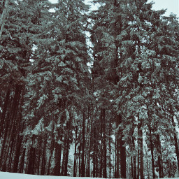 hdr freetoedit forest winter snow