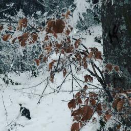 nature buche switzerland winter freetoedit