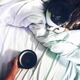 teatime cat cozy lifestyle