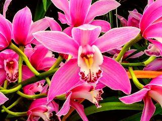 freetoedit flowers garden summer pinkflowers