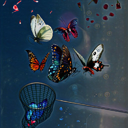 freetoedit butterflies flyingflowers perspectivetool rotatetool