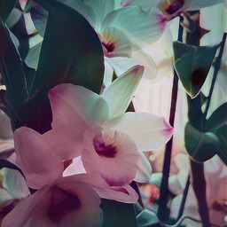 magiceffects madewithmagic moonlight pinkandblue orchids