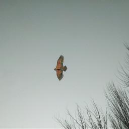 freetoedit nature photography kite sky
