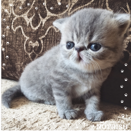 freetoedit cat sweet