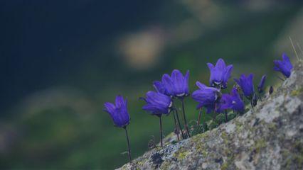 nature macro spring flower