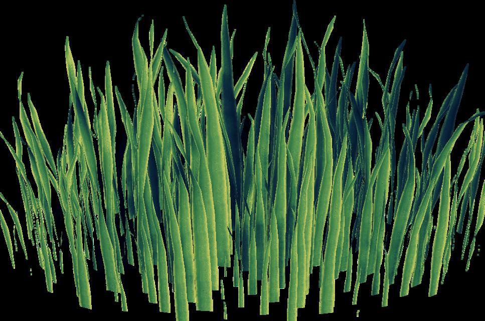#grass #green #origftestickers #freetoedit