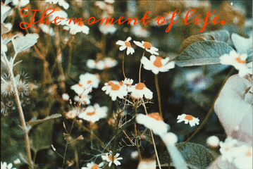 freetoedit flowers script quote