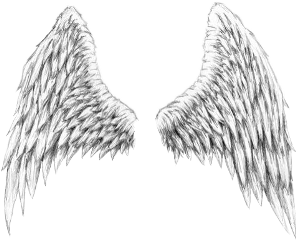 wings angel pngedit pngtumblr freetoedit